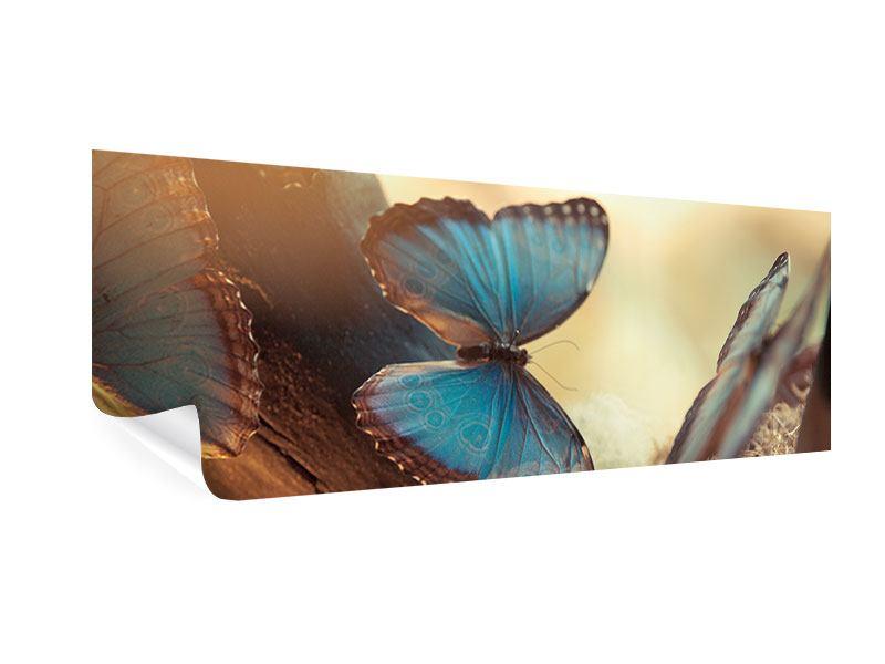 Poster Panorama Schmetterlinge