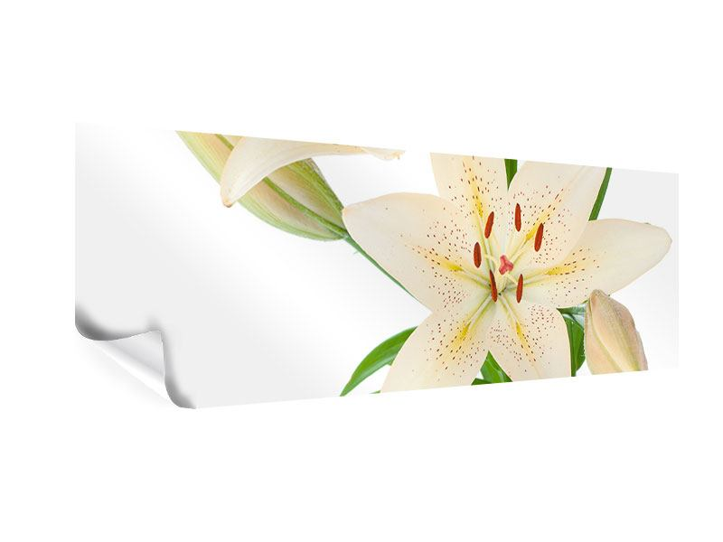Poster Panorama Weisser Lilienstrauch