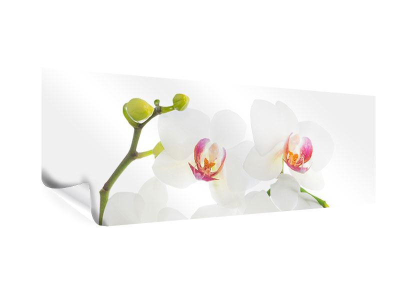 Poster Panorama Orchideenliebe