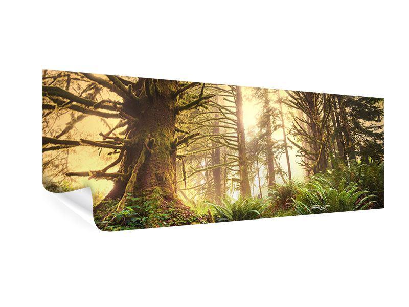 Poster Panorama Sonnenuntergang im Dschungel