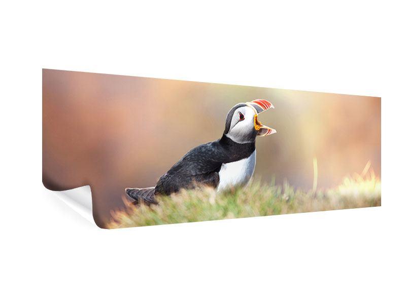 Poster Panorama Der Papageitaucher