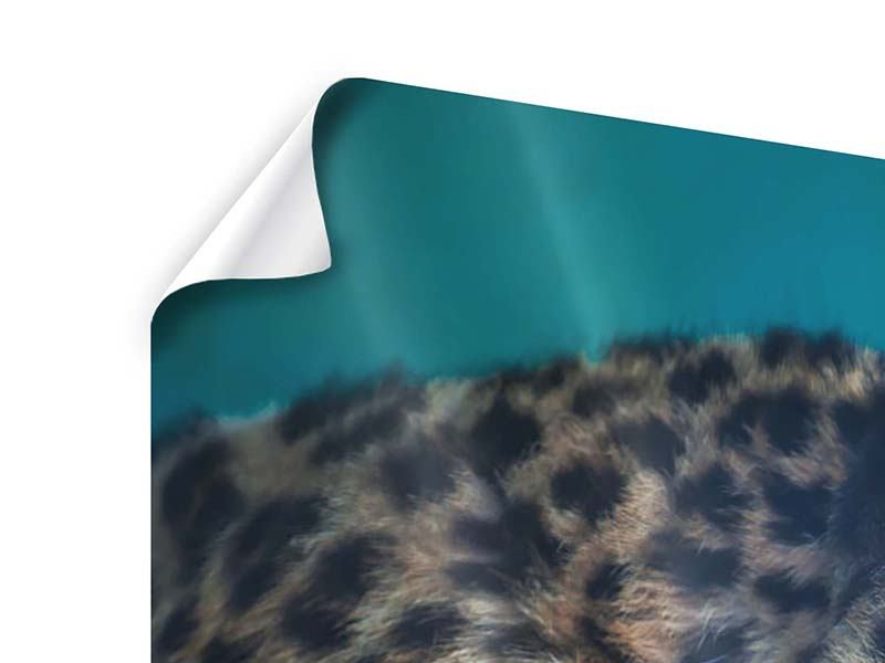Poster Panorama Leopard XL