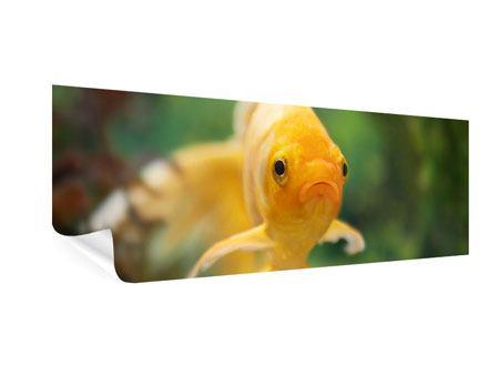 Poster Panorama Der Fisch