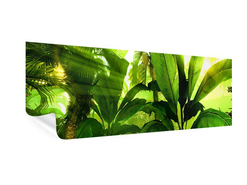 Poster Panorama Sonnenaufgang im Regenwald
