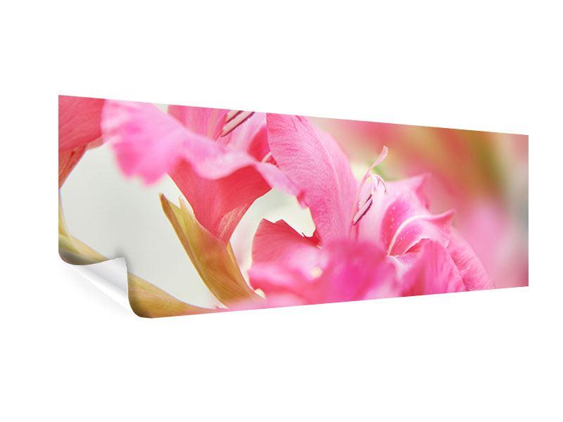 Poster Panorama Gladiolen