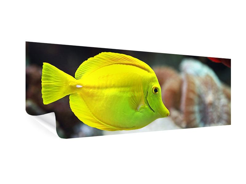 Poster Panorama Segelflossendoktorfisch