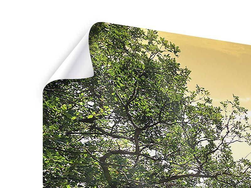 Poster Panorama Am Ende des Waldes