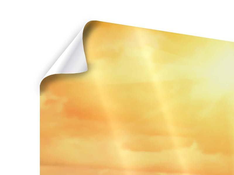 Poster Panorama Goldenes Licht für Sonnenblumen