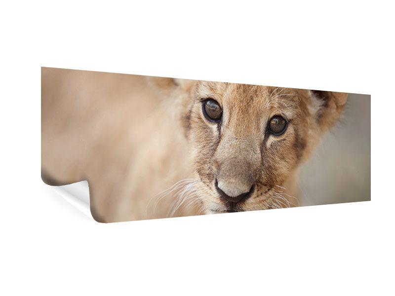 Poster Panorama Löwenbaby