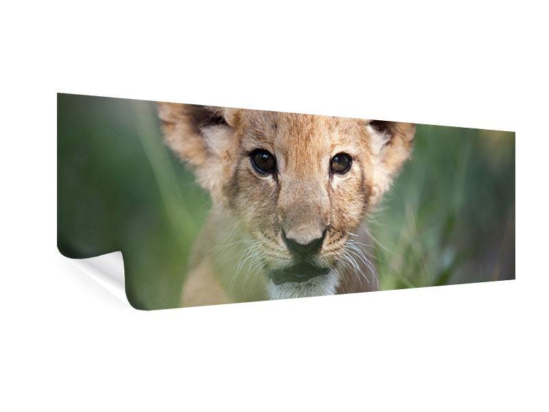 Poster Panorama Das Löwenbabay