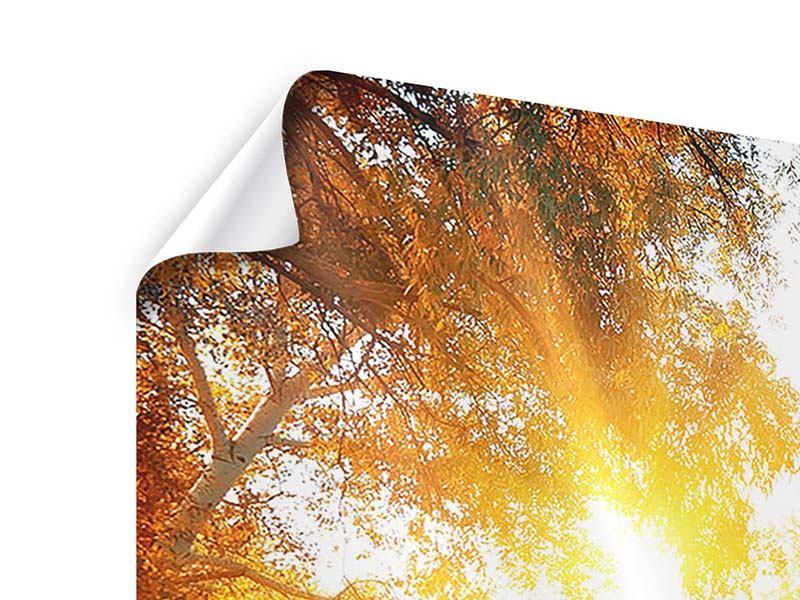 Poster Panorama Waldspiegelung im Wasser