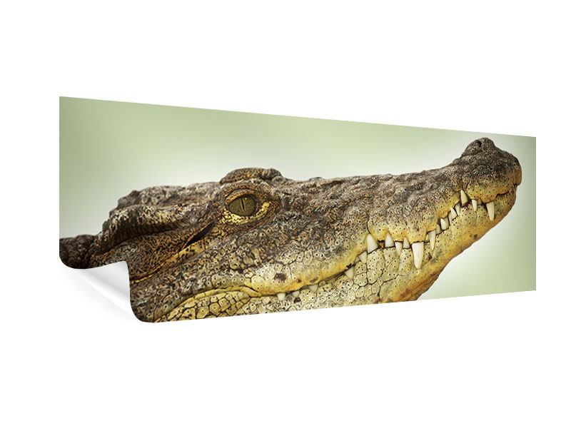 Poster Panorama Close Up Alligator