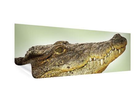 Poster Panorama Close Up Alligator