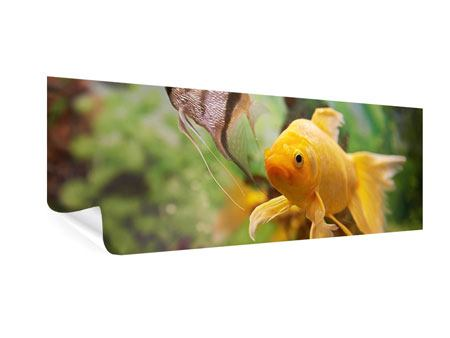 Poster Panorama Bunte Fische