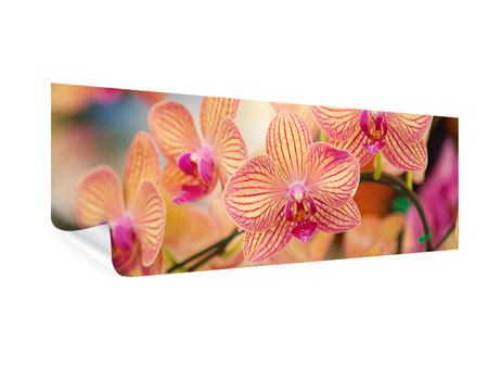 Poster Panorama Exotische Orchideen