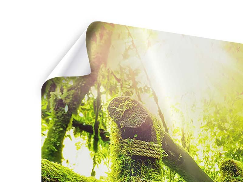 Poster Panorama Moos