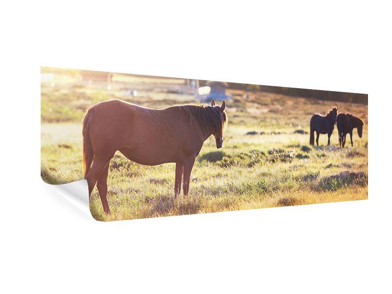 Poster Panorama Wilde Pferde