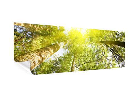 Poster Panorama Baumkronen in der Sonne