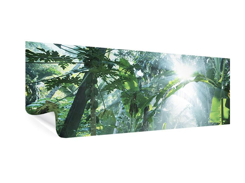 Poster Panorama Dschungelstar
