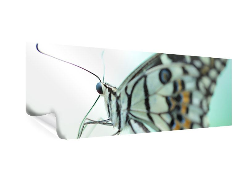 Poster Panorama Schmetterling XXL