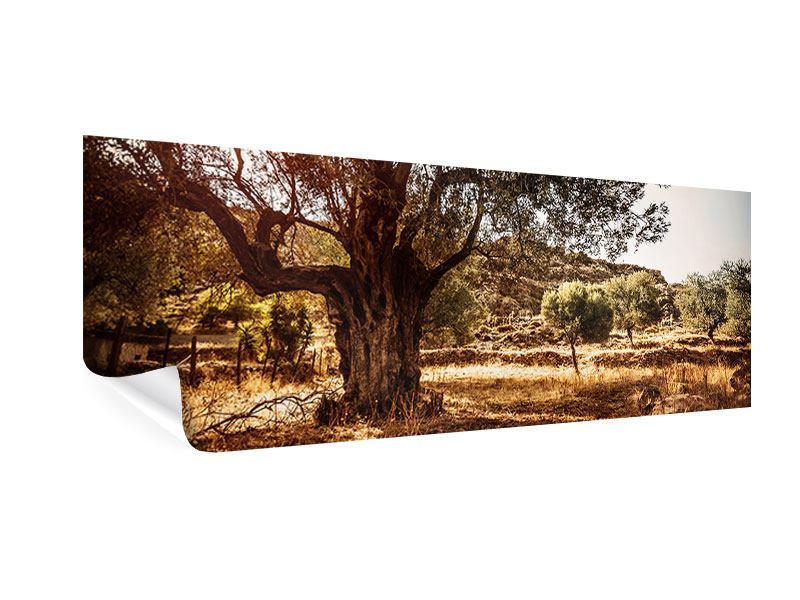 Poster Panorama Olivenhain