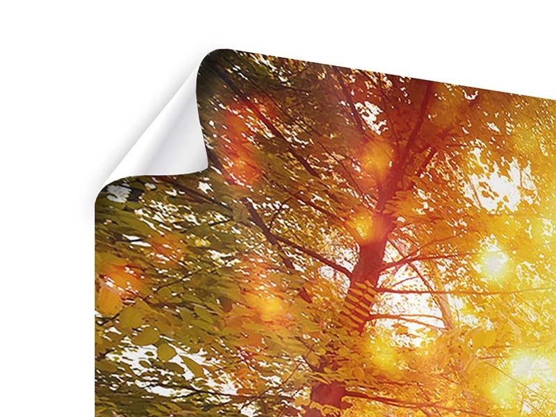 Poster Panorama Vollblut im Herbstwald