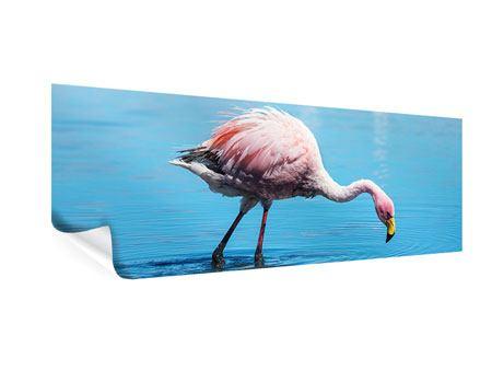 Poster Panorama Der Flamingo
