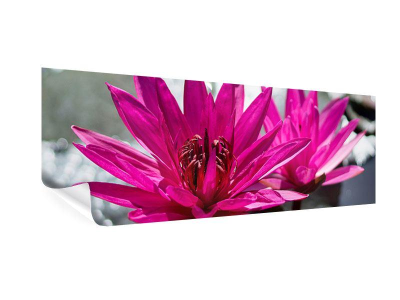 Poster Panorama Seerosenduo in Pink