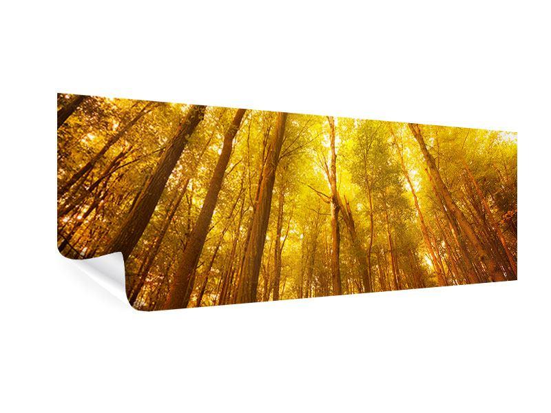 Poster Panorama Herbstwald