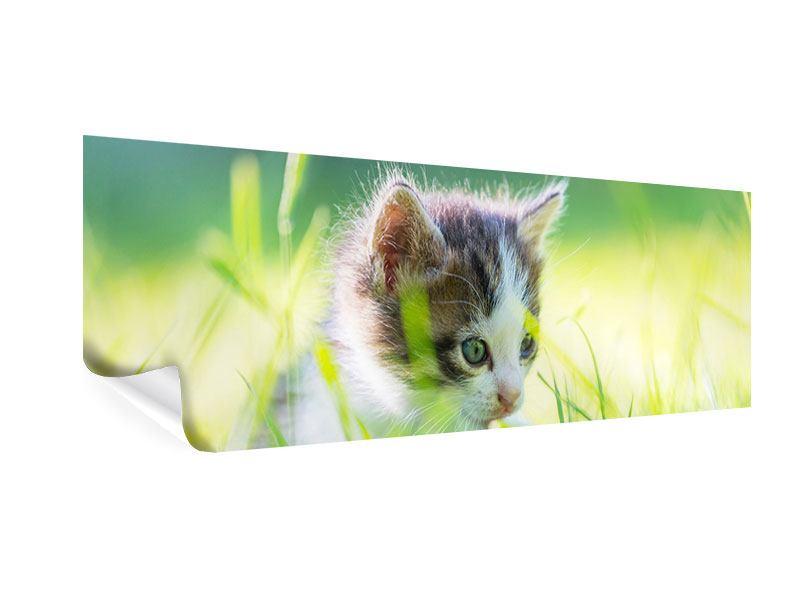 Poster Panorama Kitten