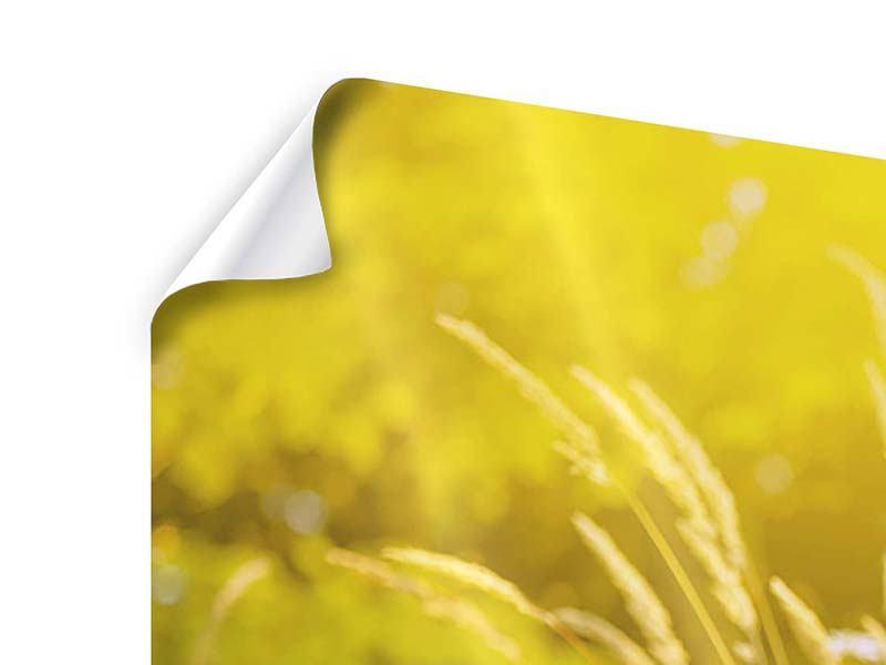Poster Panorama Sommerliche Blumenwiese