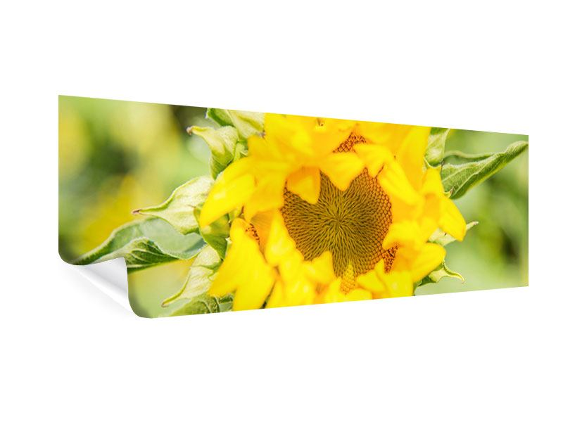 Poster Panorama Wilde Sonnenblume