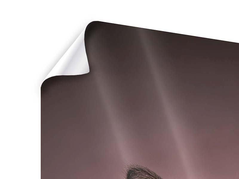 Poster Panorama Elegante Samtpfoten