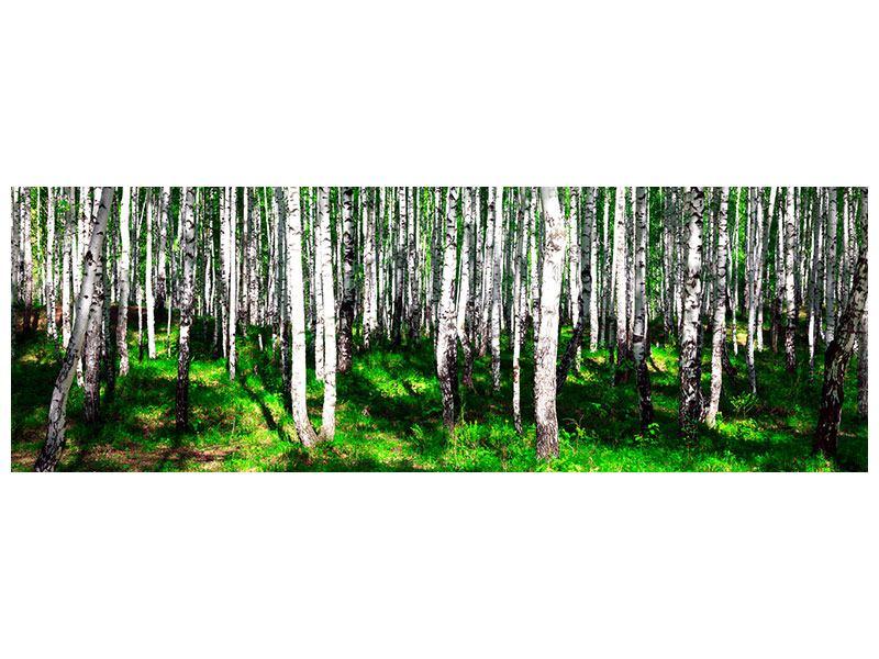 Poster Panorama Sommerlicher Birkenwald