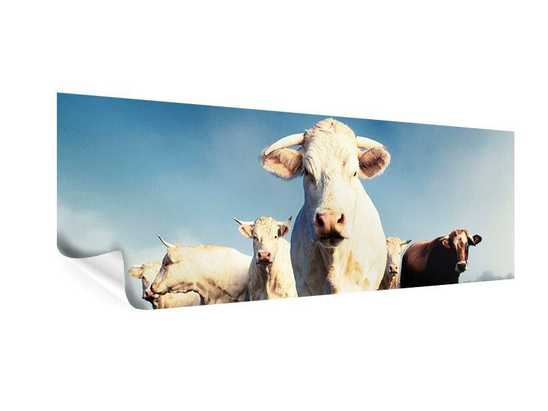 Poster Panorama Kühe