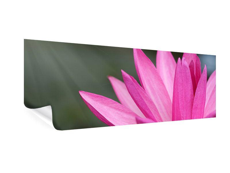 Poster Panorama XXL Seerose in Pink