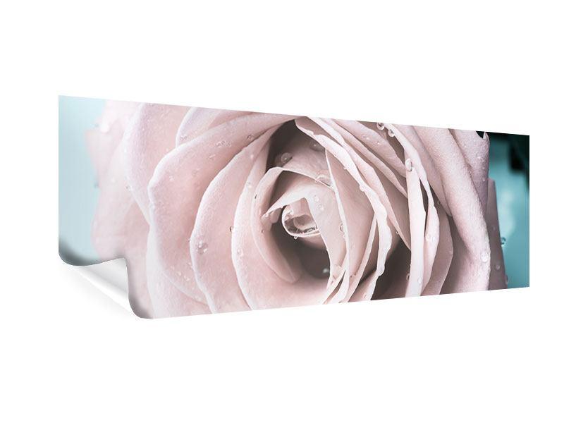 Poster Panorama Pastellrose