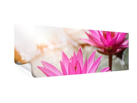 Poster Panorama Lotus-Duo