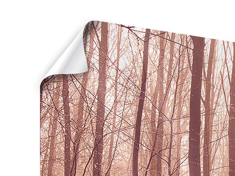 Poster Panorama Sonnenuntergang im Herbstwald