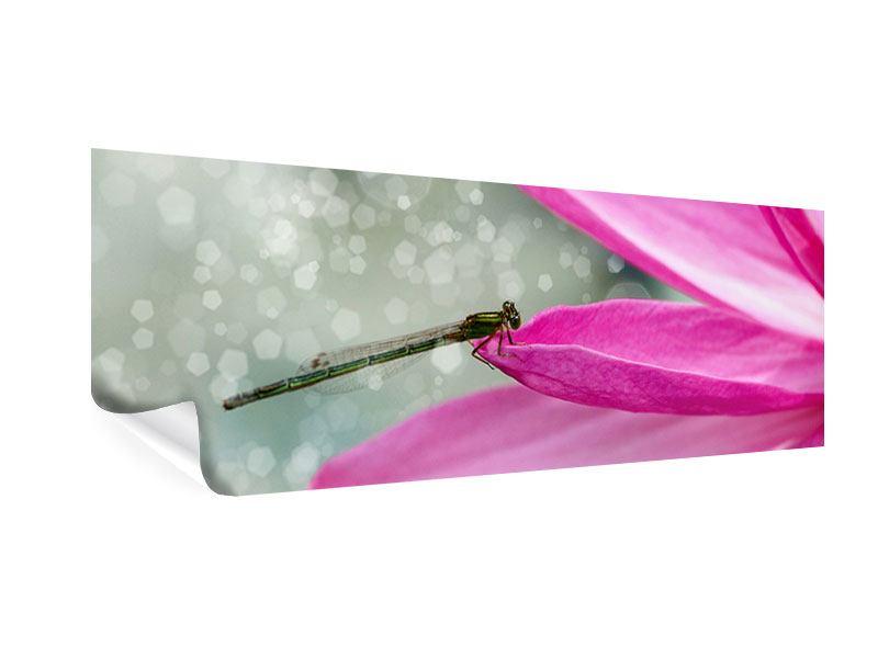 Poster Panorama Libelle auf dem Seerosenblatt