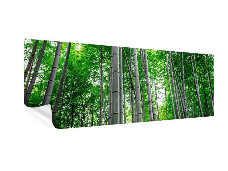 Poster Panorama Bambuswald