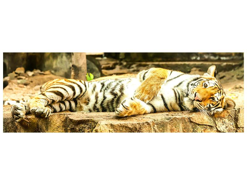 Poster Panorama Der Sibirische Tiger