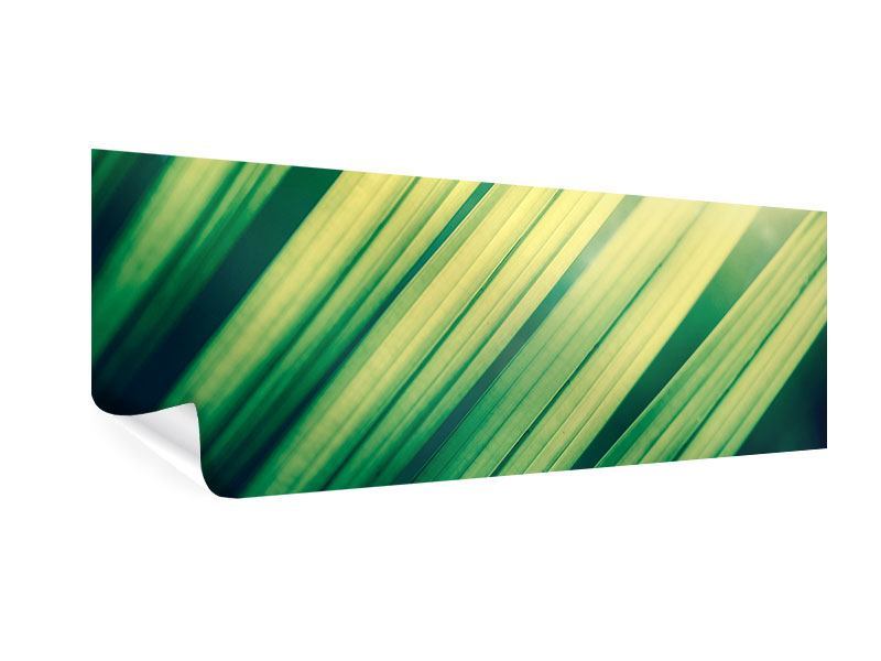 Poster Panorama Beleuchtetes Palmblatt