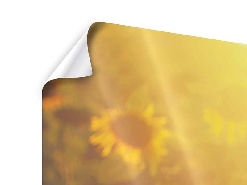 Poster 3-teilig Sonnenblumen im goldenen Licht