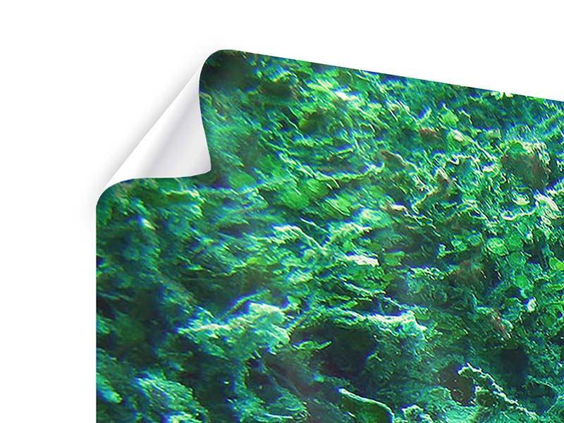 Poster 3-teilig Korallen