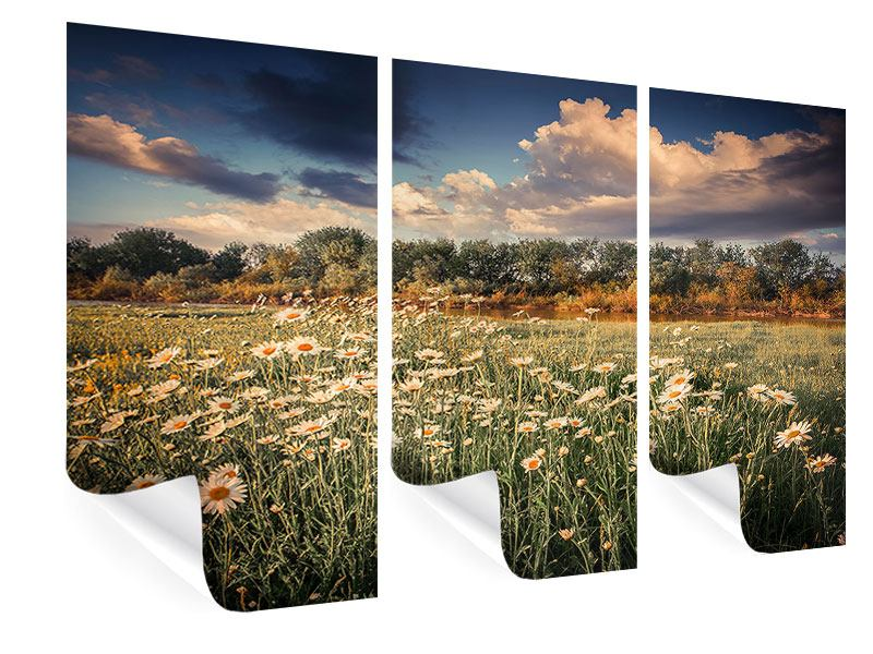 Poster 3-teilig Die Wiesenmargerite am Fluss