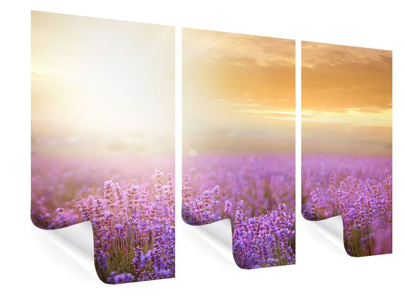 Poster 3-teilig Sonnenuntergang beim Lavendelfeld