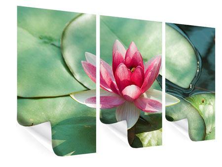 Poster 3-teilig Der Frosch und das Lotusblatt