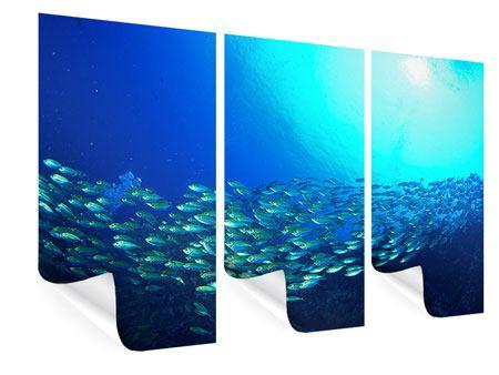 Poster 3-teilig Fischschwarm