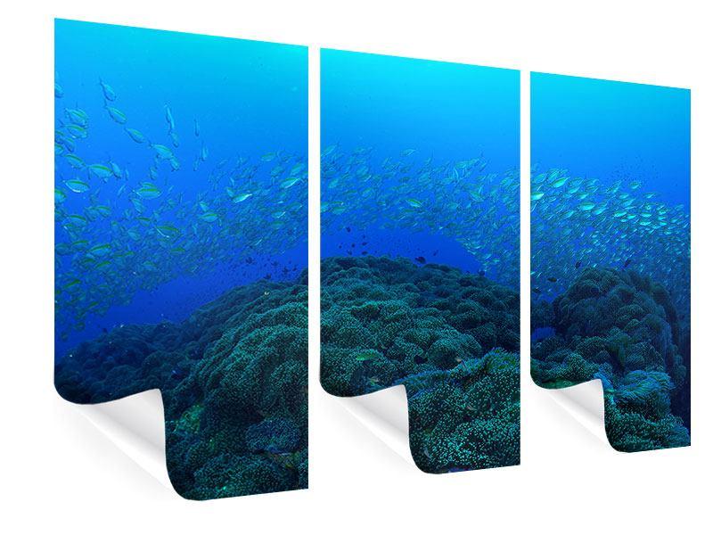 Poster 3-teilig Fischschwärme